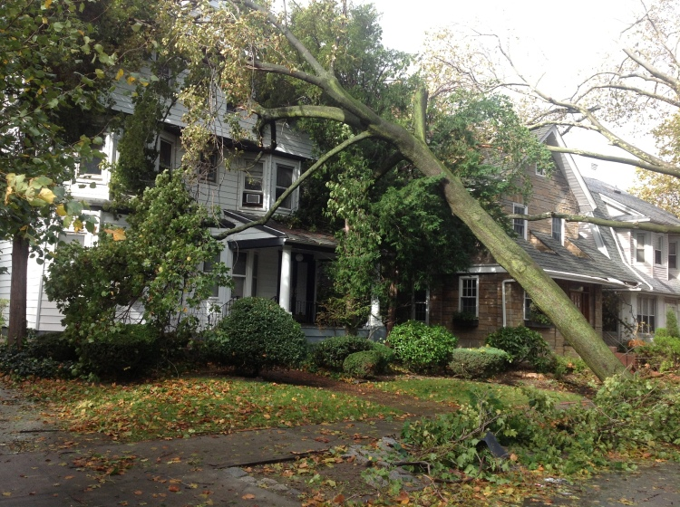 Ditmas Park, Brooklyn, the day after Sandy, October 2012